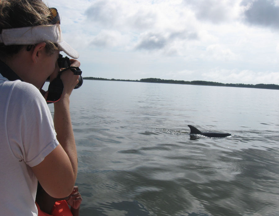 Dolphin Research Volunteer