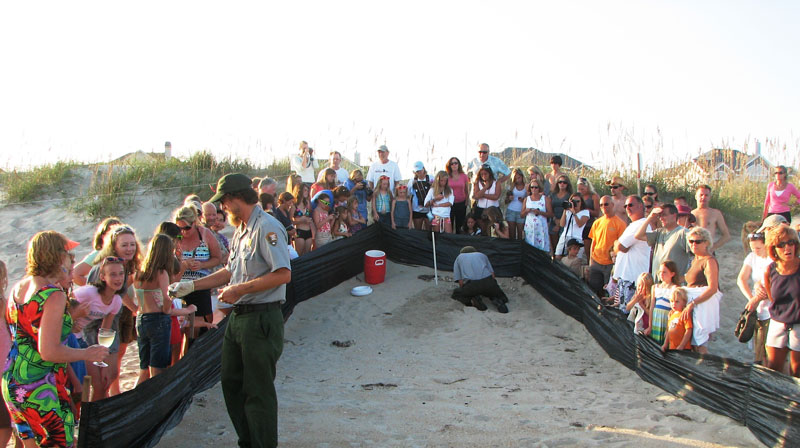 National Park Service Offers Sea Turtle Nest Excavation Programs in August and September