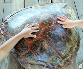 Our Coast: Turtle Tales