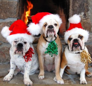 Pets and Family Photos with Santa December 5