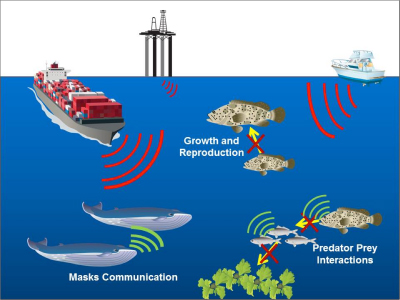 Oil and Gas Industry Geophysical Survey Activity in the Atlantic Ocean
