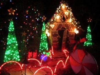 Gardens light show and activities brighten the holidays