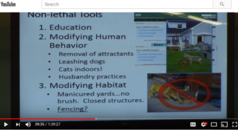Video: Coyote Conflict Management